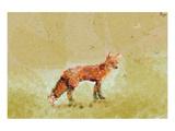 Butterfly Fox