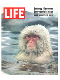 LIFE Japan Snow Monkey-Ecology