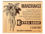 Mandrakes  Extra Loud