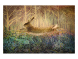 Giant Hare leaps