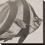Vintage Fish I