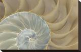 Soft Nautilus