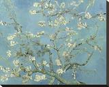 Almond Blossoms, 1890 Tableau sur toile par Vincent Van Gogh