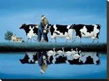 Delta Cows
