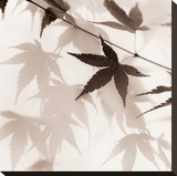 Japanese Maple Leaves No 2