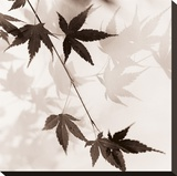 Japanese Maple Leaves No 1