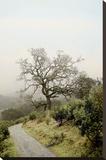 Oak Tree 45