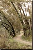 Oak Tree 49