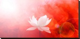 Lotus in Flames