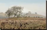 Oak Tree 68