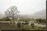 Oak Tree 57