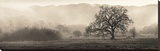 Meadow Oak Tree