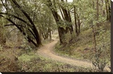 Oak Tree 51