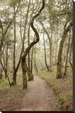 Oak Tree 48