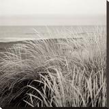 Tuscan Coast Dunes 2