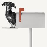 You've Got Mail Reproduction d'art par Jon Bertelli