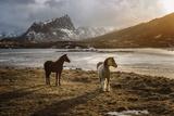Lofoten Horses Papier Photo par Marco Carmassi