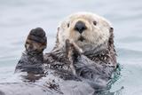 Yesterday I Caught a Fish Thiiis Big! - Otter. Alaska Papier Photo par Roman Golubenko