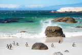 Awesome South Africa Collection - African Penguins at Boulders Beach VI