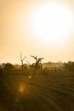 Awesome South Africa Collection - Savanna at Sunrise IV