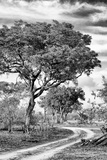Awesome South Africa Collection B&W - African Landscape with Acacia Tree VIII