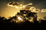 Awesome South Africa Collection - Trees Silhouette at Twilight on the Savanna