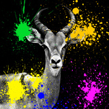 Safari Colors Pop Collection - Antelope Reedbuck IV