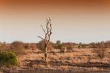 Awesome South Africa Collection - Savanna at Sunrise II