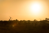 Awesome South Africa Collection - Savanna at Sunrise