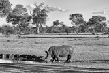 Awesome South Africa Collection B&W - Black Rhinoceros