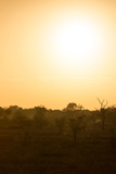 Awesome South Africa Collection - Savanna at Sunrise I
