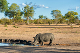 Awesome South Africa Collection - Black Rhinoceros and Savanna Landscape