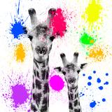 Safari Colors Pop Collection - Giraffes Portrait V Giclée par Philippe Hugonnard