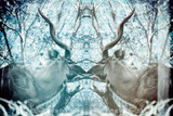 Awesome South Africa Collection - Reflection of Greater Kudu - Aquamarine & Grey