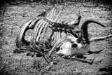 Awesome South Africa Collection B&W - Animal Skeleton in the African Savannah