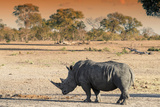 Awesome South Africa Collection - Black Rhinoceros and Savanna Landscape at Sunset