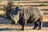 Awesome South Africa Collection - Black Rhinoceros I