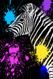 Safari Colors Pop Collection - Zebra III