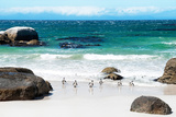 Awesome South Africa Collection - African Penguins at Boulders Beach IV