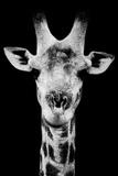 Safari Profile Collection - Portrait of Giraffe Black Edition V