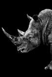 Safari Profile Collection - Rhino Black Edition IV