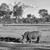 Awesome South Africa Collection Square - Rhinoceros in Savanna Landscape