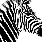 Safari Profile Collection - Zebra Portrait White Edition