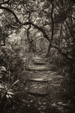 Awesome South Africa Collection B&W - African Forest I