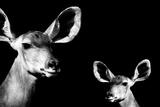 Safari Profile Collection - Antelope and Baby Black Edition II