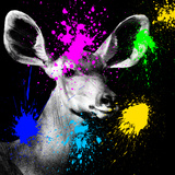 Safari Colors Pop Collection - Antelope Portrait IV