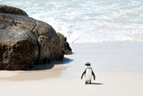 Awesome South Africa Collection - Penguin at Boulders Beach II