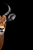 Safari Profile Collection - Antelope Face Black Edition II