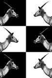 Safari Profile Collection - Antelopes Impalas