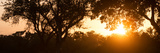 Awesome South Africa Collection Panoramic - African Sunrise Trees
